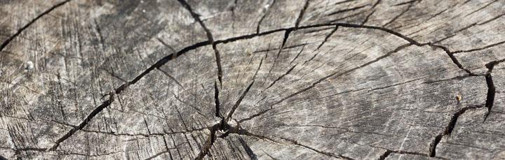 wood-366735_1280.jpg